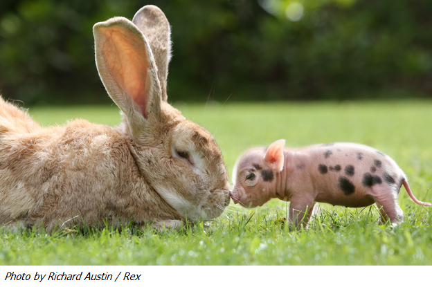 Sweet photo of bunny and piglet