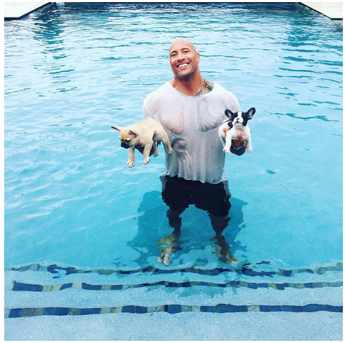 The Rock Saves Puppies