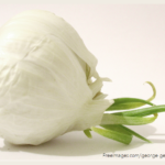 Benefits of Garlic Photo